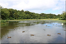 NS2209 : Ducks at the Swan Pond, Culzean Country Park by Billy McCrorie