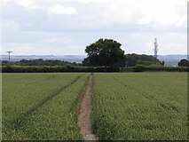 SK7045 : Footpath easily found by Ian Paterson