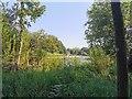 TQ0108 : Swanbourne Lake, Arundel by PAUL FARMER