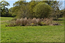 TQ5939 : Boggy area, Dunorlan Park by N Chadwick