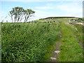 SE0715 : Causeway and an elder tree, Slaithwaite by Humphrey Bolton