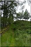 NY3404 : Path to Neaum Crag by DS Pugh