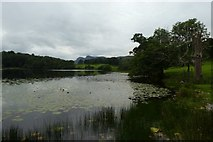NY3404 : Lillies on Loughrigg Tarn by DS Pugh