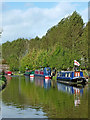 SJ7129 : Shropshire Union Canal near Cheswardine in Shropshire by Roger  Kidd