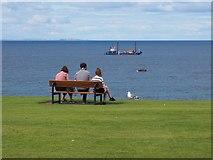 NT6779 : Seagull waits in Hope at Dunbar by Jennifer Petrie