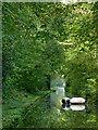SJ6930 : Woodseaves Cutting in Shropshire by Roger  Kidd