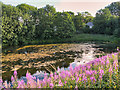 SD7508 : Starmount Lodges, Browns Road Lagoon by David Dixon