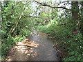 SU0697 : River Churn near South Cerney by Malc McDonald