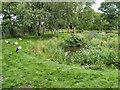 SD4314 : White Stork Enclosure/Wildfowl Garden, Martin Mere by David Dixon