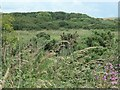 TA1873 : The southern end of Hoddy Cows Spring SSSI by Christine Johnstone
