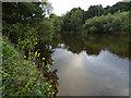 SO7974 : River Severn near Bewdley by Mat Fascione