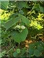 TF0820 : Squirrel food by Bob Harvey