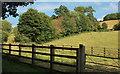 SX9491 : Overgrown hedge, Ludwell Valley Park by Derek Harper