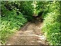 SK6454 : Rob Lane, Edingley by Alan Murray-Rust