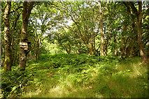 NH5857 : Bird box in Easter Oak Wood by Julian Paren
