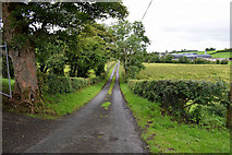 H5366 : Laragh Road, Beragh by Kenneth  Allen