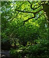 TF0820 : Woodland corner by Bob Harvey
