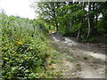 TQ6143 : Path in Tudeley Woods Nature Reserve by Marathon