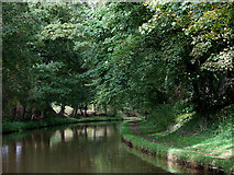 SJ6541 : Canal south of Audlem in Cheshire by Roger  Kidd