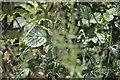 SK9924 : Amid the wildplants by Bob Harvey