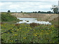 SE8733 : Becoming wetland, west of North Cave wetlands by Christine Johnstone