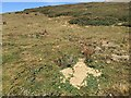 TV5097 : Rabbit holes above Hope Gap, east of Seaford Head by Robin Stott