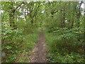 TQ6244 : The Tunbridge Wells Circular Walk near Tudeley by Marathon