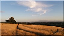 SE2526 : Farm Fields by Scotchman Lane, Morley, West Yorkshire by I Love Colour