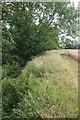 TL4433 : Stort Riverbank by Glyn Baker