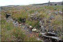 NJ0747 : Stripe of Grevach by Anne Burgess