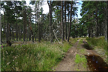 NJ0747 : Woods near Rochuln by Anne Burgess