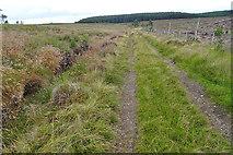NJ0846 : Track near Loch Dallas by Anne Burgess