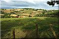 SX9169 : Cattle by Ridge Road by Derek Harper