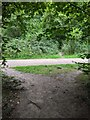 TF0820 : Woodland path by Bob Harvey