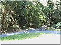 TG1417 : Felthorpe Road, Attlebridge by Adrian Cable