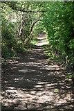 TQ5937 : Tunbridge Wells Circular Walk by N Chadwick