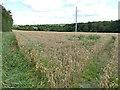 SE3127 : Wheatfield off Sharp Lane by Stephen Craven