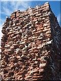 NT6779 : Kittiwakes nesting on Dunbar Castle Ruins by Jennifer Petrie