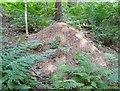 NZ0356 : Wood ant nest, Wild Wood by Adrian Taylor