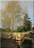 ST7565 : Kennet and Avon Canal in Sydney Gardens by Derek Harper
