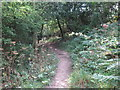 NZ3376 : Footpath near Starlight Castle, Holywell Dene by Geoff Holland
