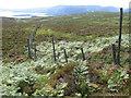 NS4294 : Deer fence on hillside below Creagan Dubha by Chris Wimbush
