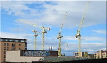 NT2472 : Cranes at Springside by M J Richardson