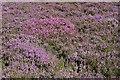 NJ2724 : Many Shades of Purple by Anne Burgess