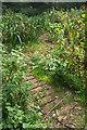 SX8963 : Closed path, Cockington valley by Derek Harper