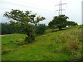 SE2400 : Hawthorn trees in a field above Sheephouse Wood, Langsett by Humphrey Bolton