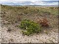 NH9158 : Culbin Sands by valenta