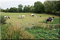 SP2640 : Cows with calves at Shipston-on-Stour by Bill Boaden