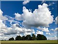 SP2974 : Clouds above a small plantation by David Lally