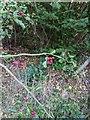 TF0820 : Autumn's Hoary Traces by Bob Harvey